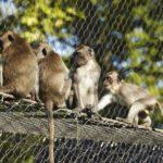 Basel Zoo Primate Enclosure Webnet Interior Close Up