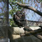 Basel Zoo Webnet Primate Enclosure Interior