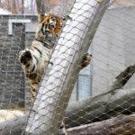 Krakow Zoo Webnet Enclosure