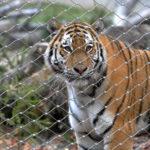Krakow Zoo Webnet Animal Enclosure